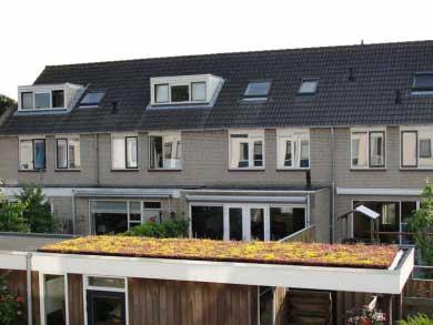 Sedum Green Roofs