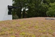 Van zwart EPDM dakvlak naar gekleurde bloemenweide!